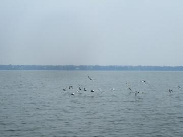 Negombo-Lagoon-Boat-Ride-Ramada-Katunayake